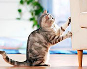 Как уберечь мебель от кошки
