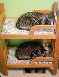 двухярусная кровать для кошек