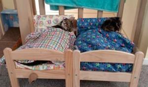 две кровати для кошек