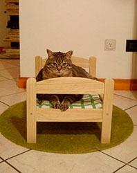 Кот и его кровать